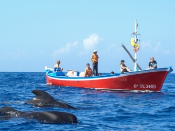 Oceano Whale Watching
