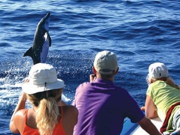 Whale Watching Touren