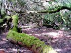 Märchenhafte Naturlandschaften im Garajonay  Nationalpark