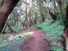 Wanderwege durchziehen den Garajonay Nationalpark