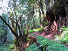 Über Wanderpfade kann man den ganzen Lorbeerwald kennen lernen