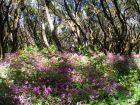 Die Natur erstrahlt in bunten Farben