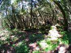 Grüne Idylle im Garajonay Nationalpark