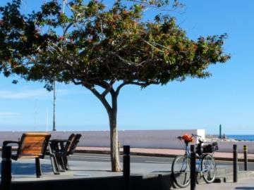 Bilder Playa Santiago
