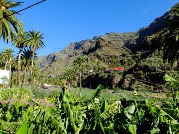 Bilder Oberes Tal (Valle Gran Rey)